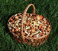 Edible fungi in basket 2020 G9.jpg