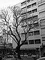 Edificio Milan (1).jpg