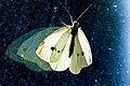 Effet-papillon.jpg