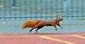 Eichhörnchen 04.jpg