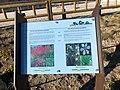 El Manzanares cuenta con un nuevo arboreto y cuatro rutas botánicas, faunísticas e históricas 03.jpg