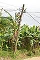 Electricien au poteau4.jpg