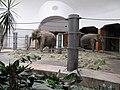Elefantenhaus Tierpark Hellabrunn1.jpg