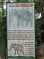 Elephant internal parts.JPG