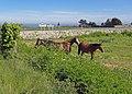 Embouchure de La Saire près de Jonville - panoramio.jpg