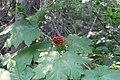 Emerald Lake IMG 5116.JPG