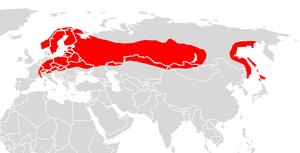 Northern bat - Image: Eptesicus nilssoni range map