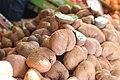 Ericales - Actinidia deliciosa - 1.jpg