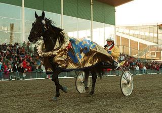 Copiad Swedish Standardbred racehorse