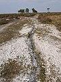 Erosion gulley on the heath, Moonhills Bog, New Forest - geograph.org.uk - 394203.jpg