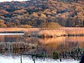 Evening at Leighton Moss - geograph.org.uk - 635284.jpg