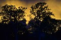 Evening in wewa.jpg