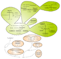 Evoluzione Magnoliophyta.png