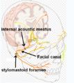 Facial canal.png