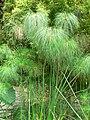 Fale - Giardini Botanici Hanbury in Ventimiglia - 400.jpg