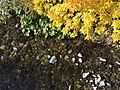 Fall colors near the river (23994350927).jpg