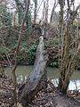Fallen tree over Pymmes Brook, Waterfall Walk, Brunswick Park.jpg
