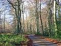 Farm road in Lambridge Wood - geograph.org.uk - 626588.jpg