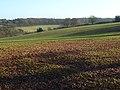 Farmland, Asheridge - geograph.org.uk - 1081202.jpg