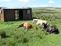 Farmland - geograph.org.uk - 928883.jpg