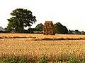 Farmland near Leckhampstead - geograph.org.uk - 39347.jpg