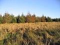 Field-woodland boundary - geograph.org.uk - 290492.jpg