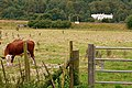 Field near Gatehampton - geograph.org.uk - 922302.jpg
