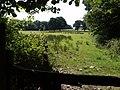 Field on Tarka Trail - geograph.org.uk - 535837.jpg