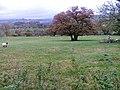 Fields Below Low Hullockhowe - geograph.org.uk - 74044.jpg