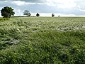 Fields at Diseworth - geograph.org.uk - 1343910.jpg