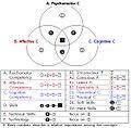 Figure 1 The relationship between competencies and skills.jpg
