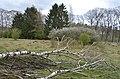 Fine views at Westerheide Schaarsbergen with fallen birches and some blossom - panoramio.jpg
