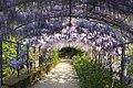Firenze - Florence - Giardino Bardini - View East & Down 'Wisteria Lane' I.jpg