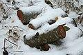 Firewood in Russia. img 07.jpg