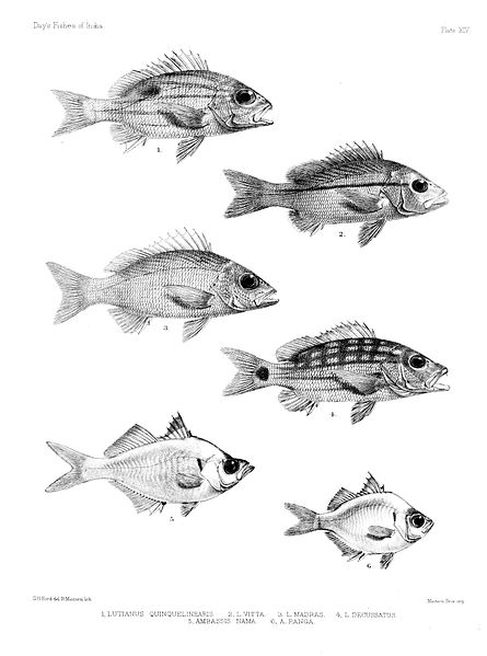 File:Fishes of India. Atlas. Plate XIV.jpg