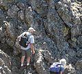 Flickr - brewbooks - Plant hunting near Welch Peak (7).jpg