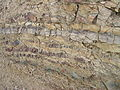 Flickr - brewbooks - Uplifted distressed rock in road cut (2).jpg