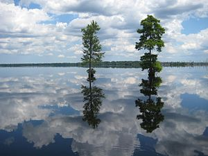Great Dismal Swamp National Wildlife Refuge - Photograph of Lake Drummond, Great Dismal Swamp National Wildlife Refuge, Virginia