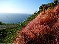 Flora do Facho - panoramio.jpg