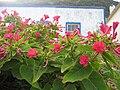 Flores delante de la casa (6045516793).jpg