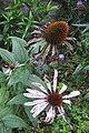 Flower (30097425470).jpg