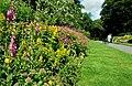 Flower beds, Botanic Gardens, Belfast - geograph.org.uk - 865024.jpg