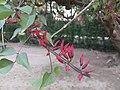 Flowers52.jpg