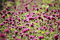 Flowers (6112696179).jpg