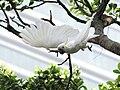 Flying (16734641496).jpg