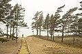 Foggy day - panoramio (5).jpg