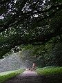 Footpath - geograph.org.uk - 346042.jpg