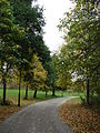 Footpath in Everton Park, Liverpool.JPG