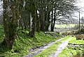 Footpath to Glan Irfon - geograph.org.uk - 353301.jpg