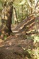 Forest II (6188034927).jpg